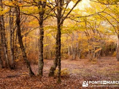 Actividades fin de semana, Parque Natural del Hayedo de Tejera Negra; ruta por la pedriza